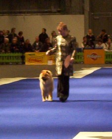 Breed parade 2004